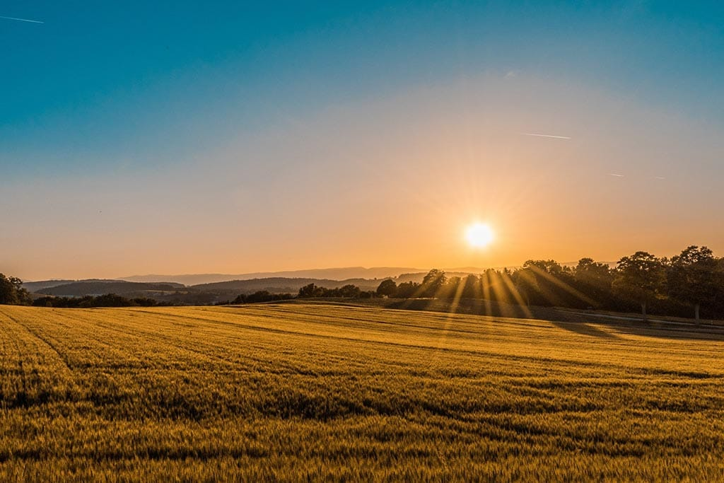 Sunset and a field